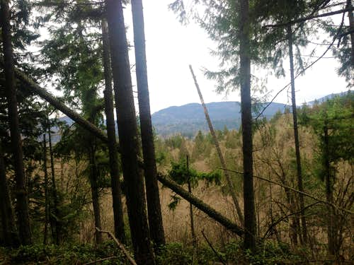 Squak Mountain