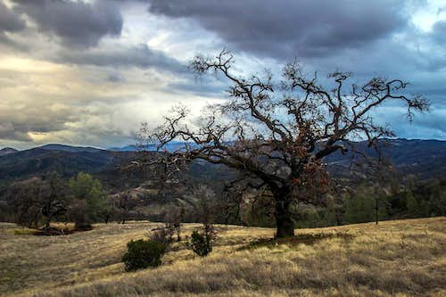 Hillside oak tree, Cache Creek Wilderness