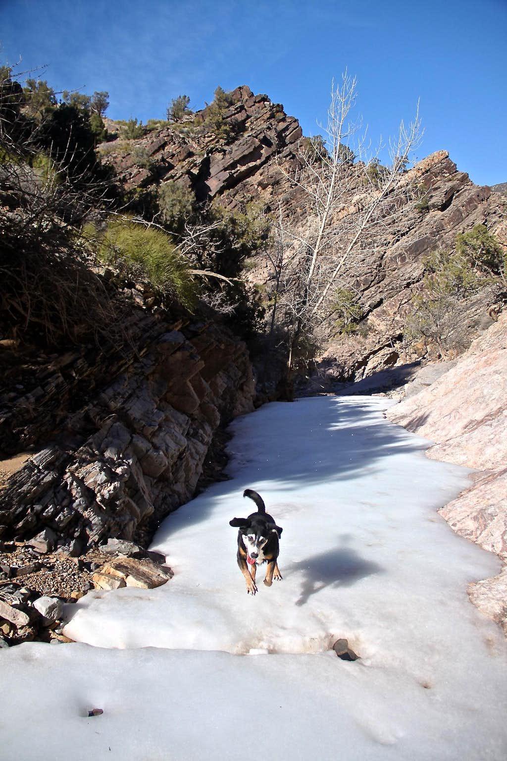 Chukar Trail