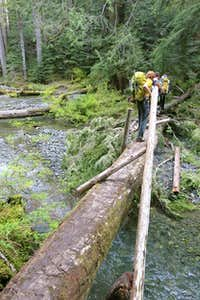 Storm damaged log bridge