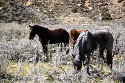 Main Canyon - Little Book Cliffs Wild Horse Area