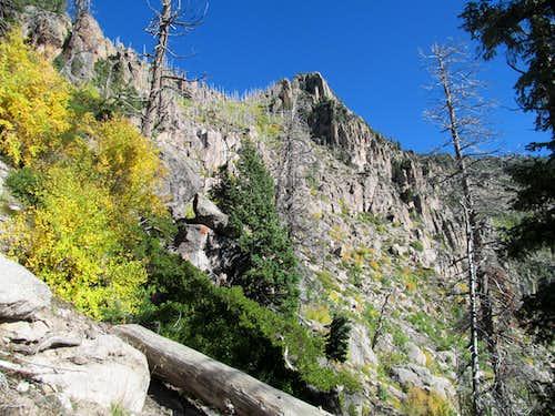 foliage near the ridge crest