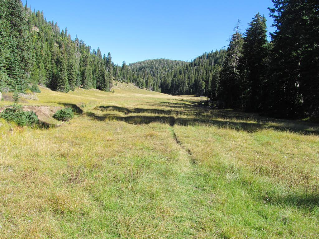 looking back at summit area meadow