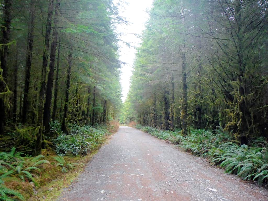 Road of moss covered trees