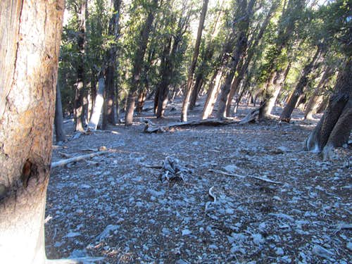 steep ascent through woods