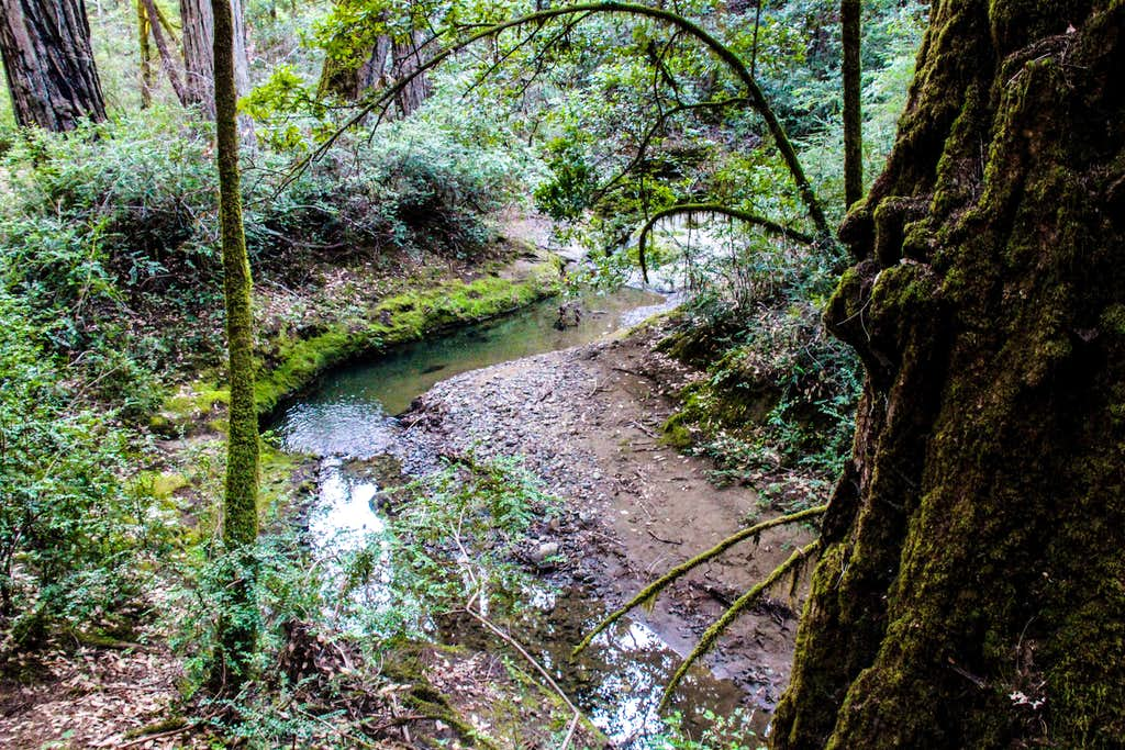 Stream by the redwoods