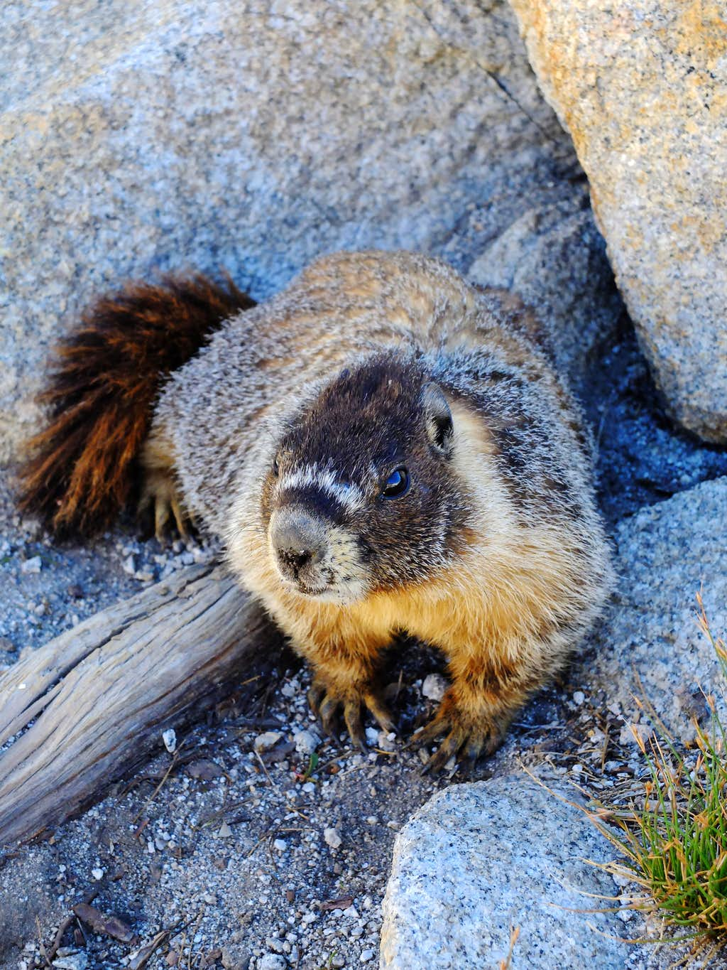 A curious marmot at our Twin Lakes campsite