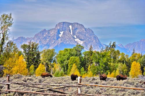 Mount Moran and Buffalos