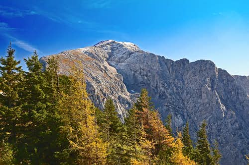 Hoher Göll and larch trees