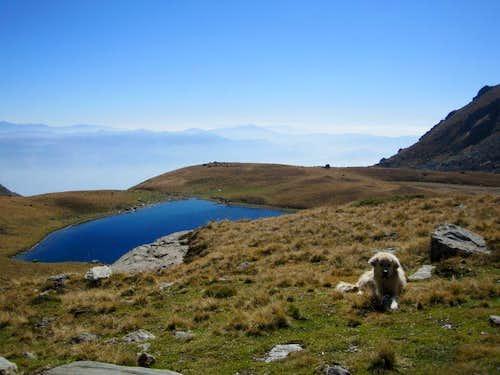 Black Lake with Sheep Dog