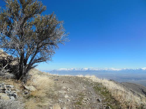Mahogany Tree above Miner's Canyon