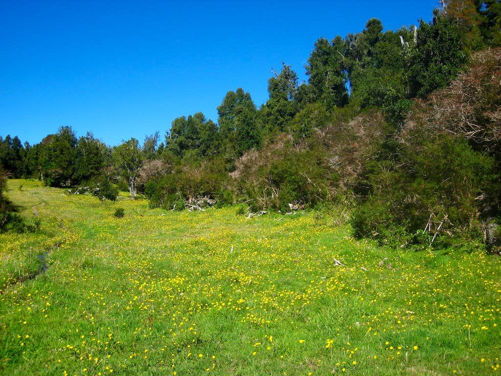 Calbuco meadow