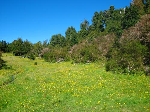Calbuco meadow