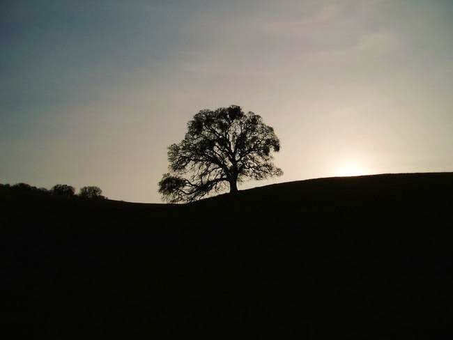 Under the Oak tree at Sunset....