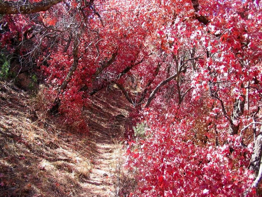 Bassett Peak AZ