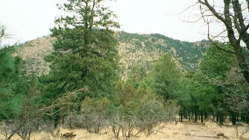 Mt. Elden from the bottom of...