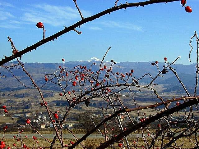 Sneznik massif from the...