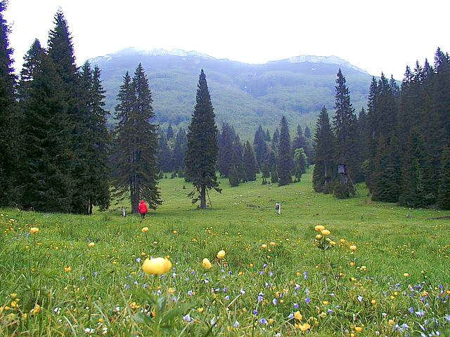 Grcovec - a nice meadow in...