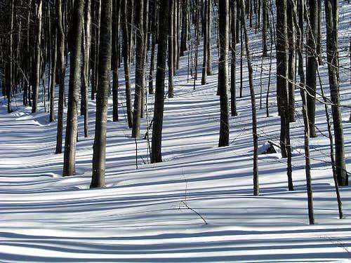 On a ski tour through Sneznik...