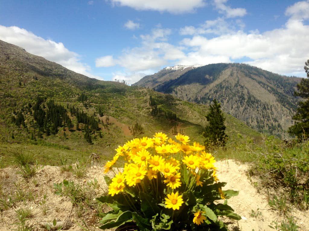 Beautiful flowers toward Icicle Creek