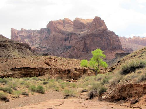Upheaval Canyon Trail