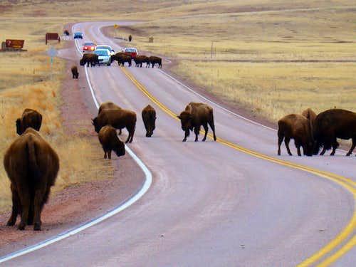 Black Hills Traffic Jam