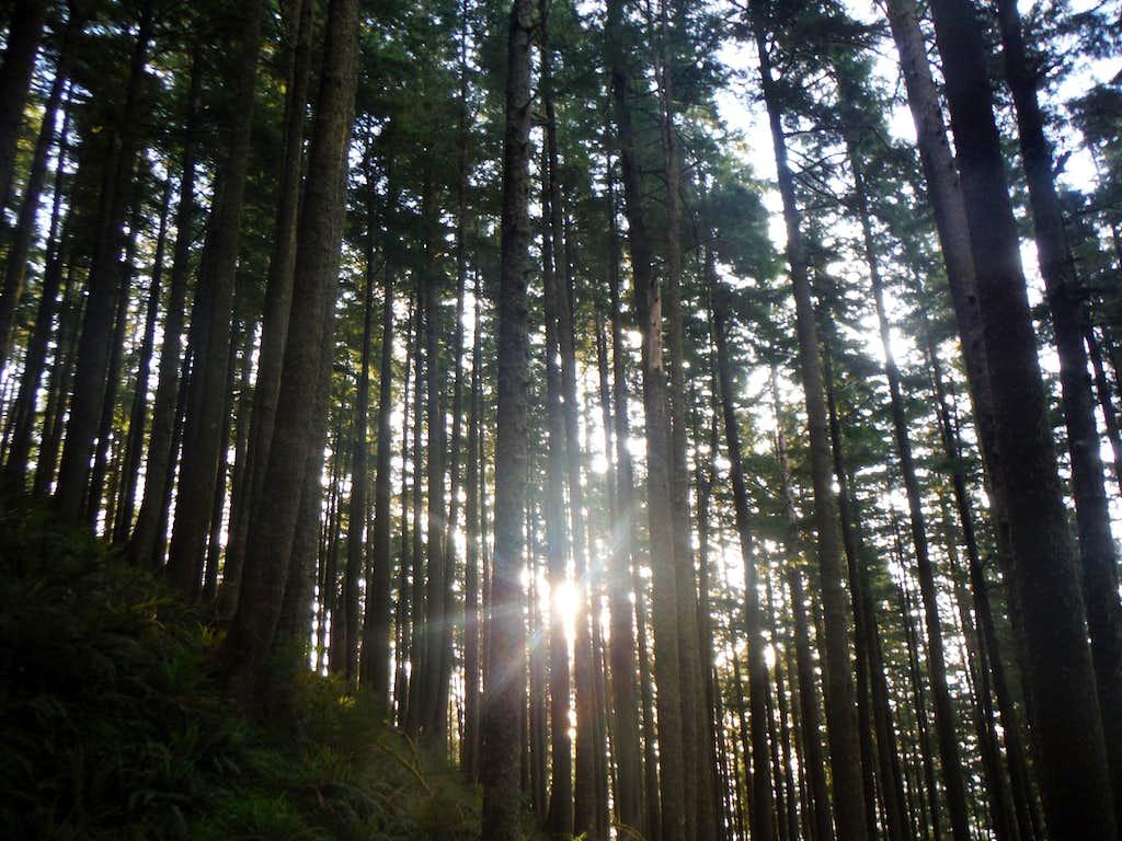 Sun piercing through the trees
