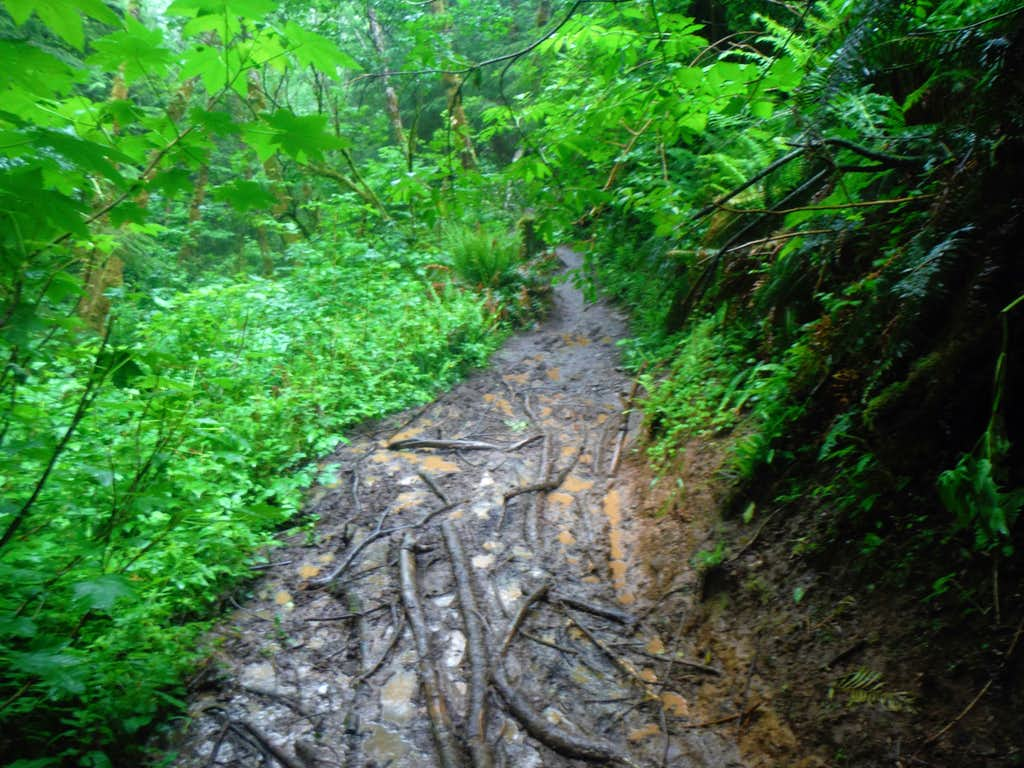 asty trail after an hour of rain