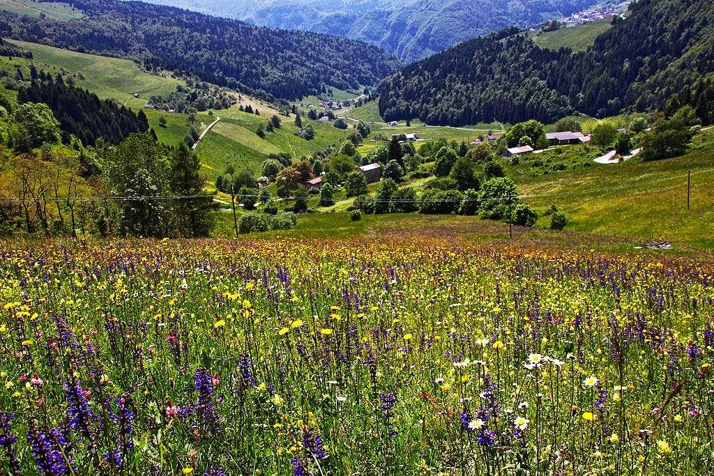 Meadows below Foza