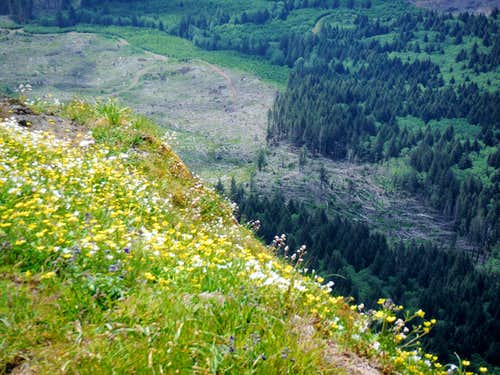 Saddle Mountain: Cliffs and Flowers