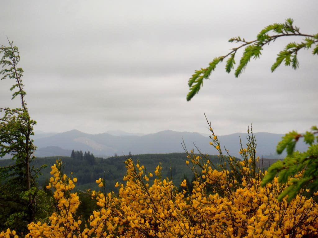 Flowers and the Coast Range