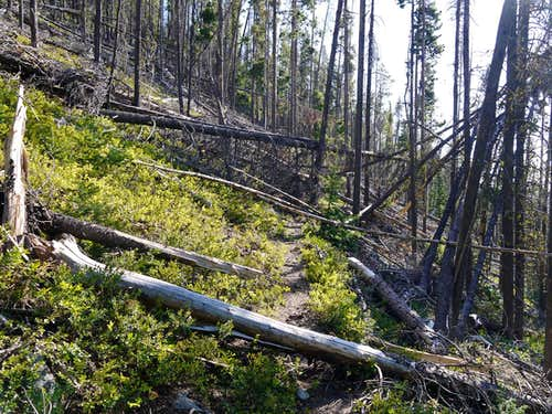 Fallen Trees on the Way to Hoodoo