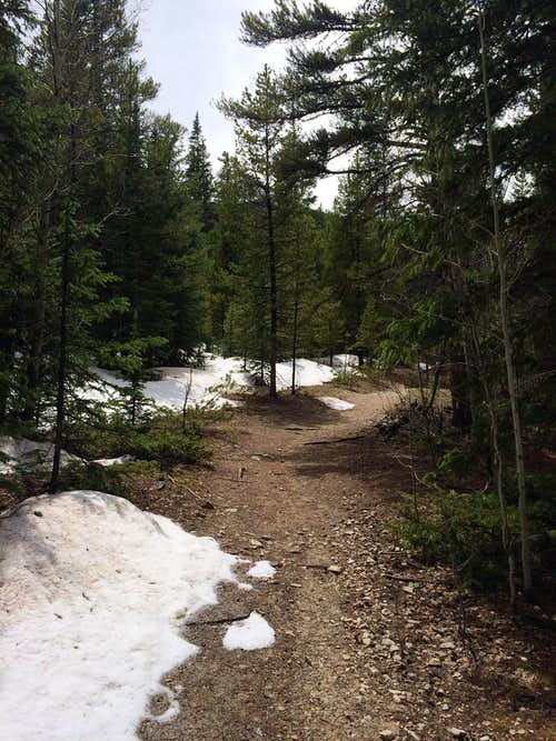 Snow Patches on Harvard's Trail