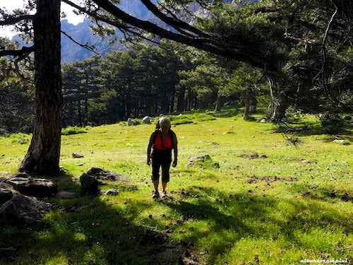 Bavella forest