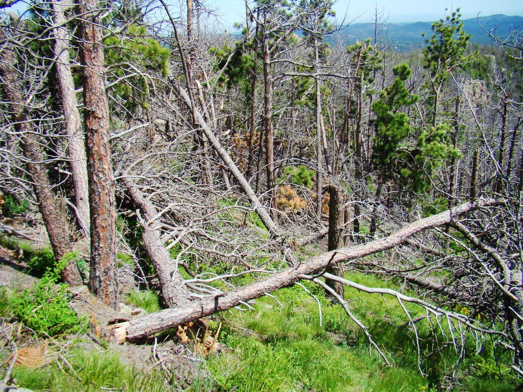 Deadfall on Sylvan Peak