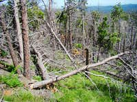 Deadfall on Sylvan Peak