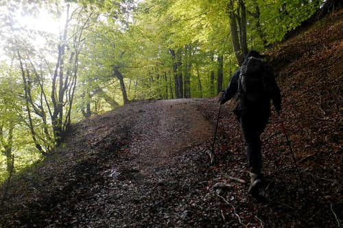 Forest track (Bosco Toscano)