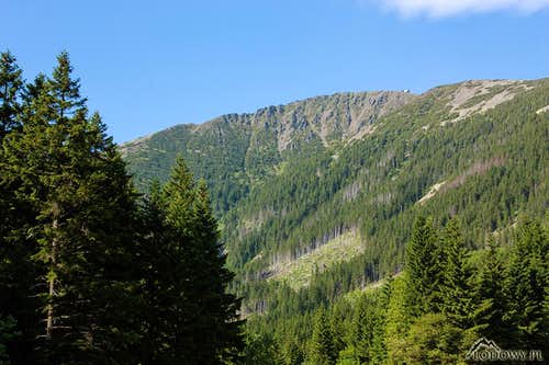 Mount Snezka from Obri Dul