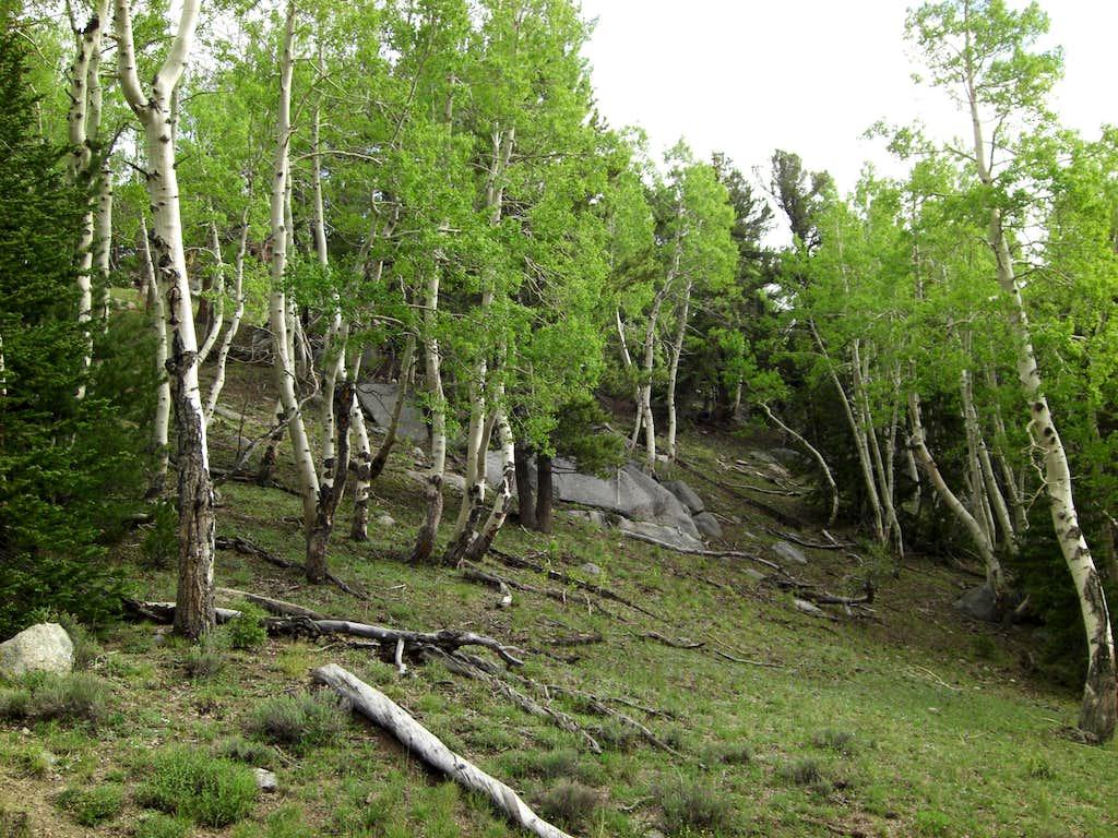 Ibapah Meadow Approach