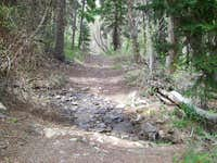 Ibapah Trail Creek 1