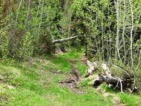 Ibapah ATV Trail End