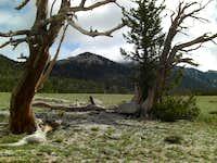 Ibapah High Meadow Rest Area