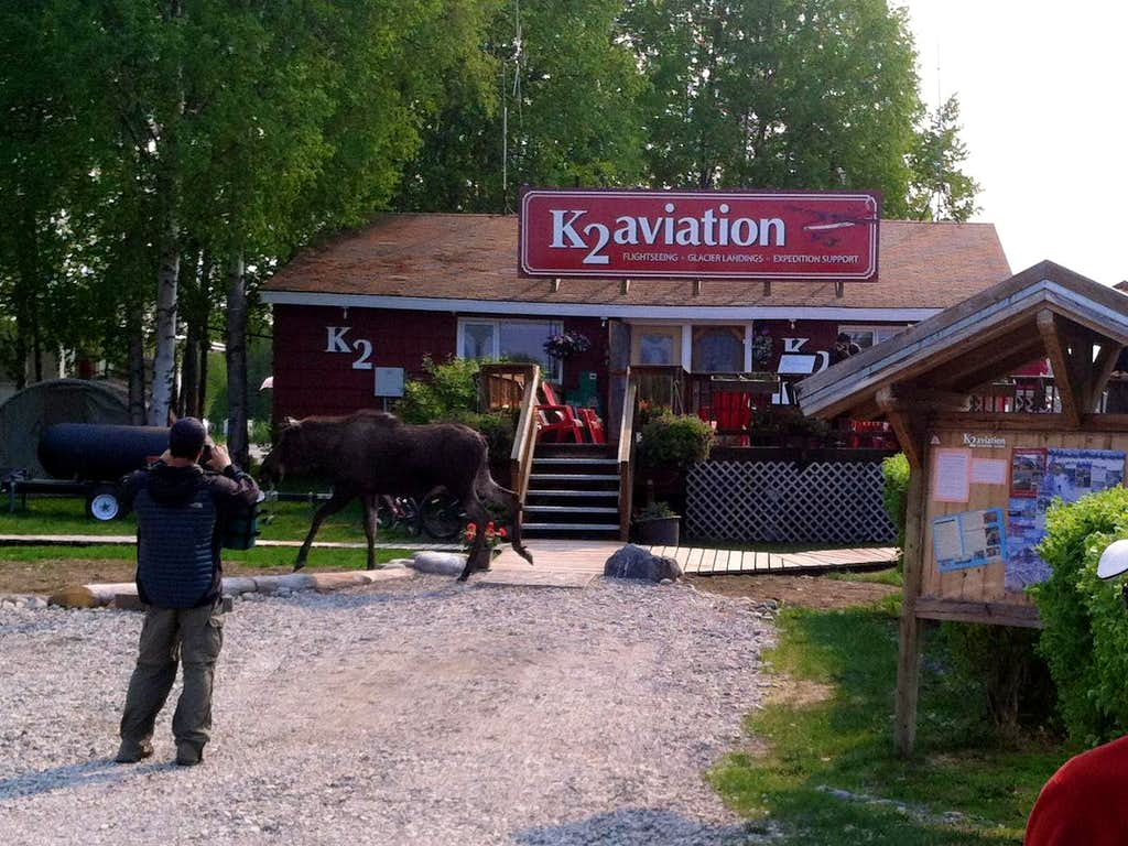 Moose at K2