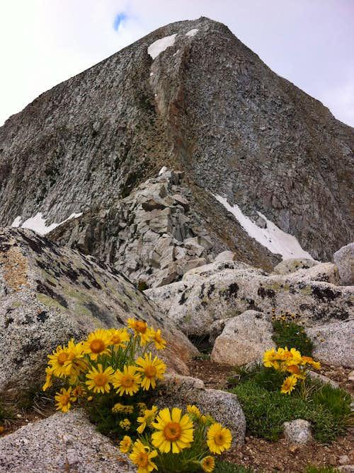 Pfeifferhorn wildflowers