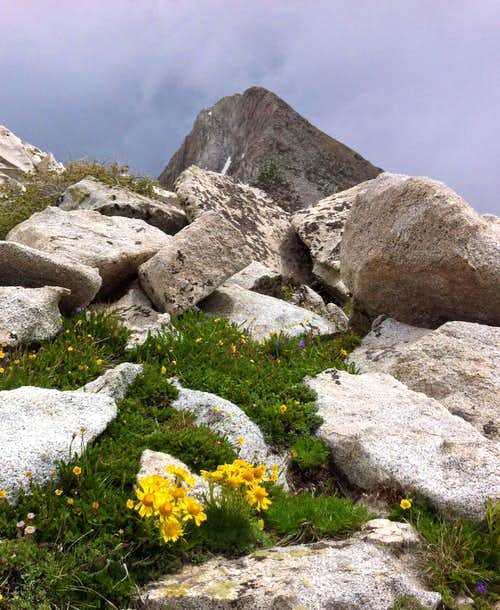 Pfeifferhorn west wildflowers
