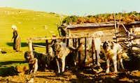 Famous shepherddogs...