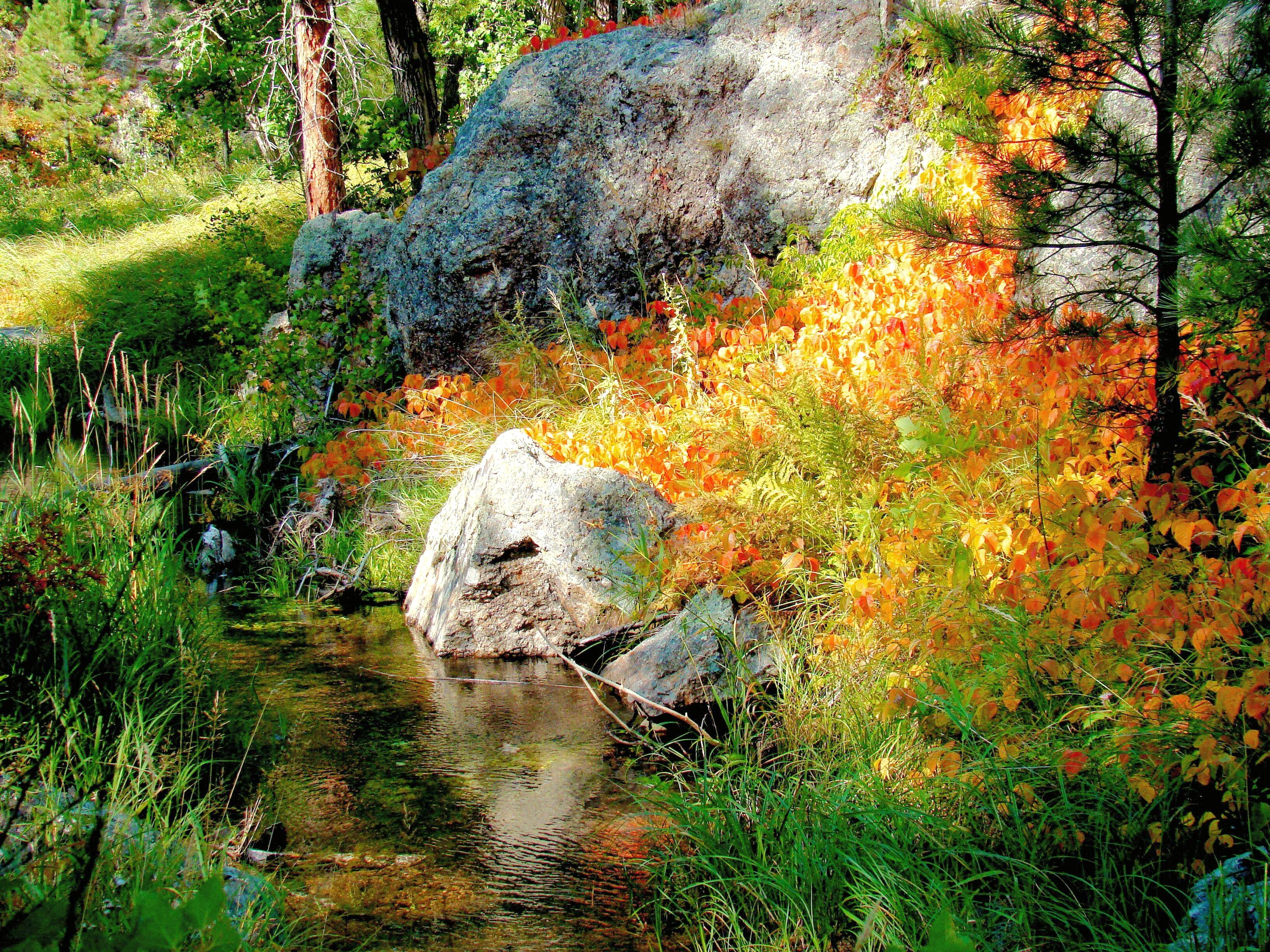 Black Hills Autumn Photo Collection
