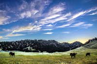 Big meadow, big sky
