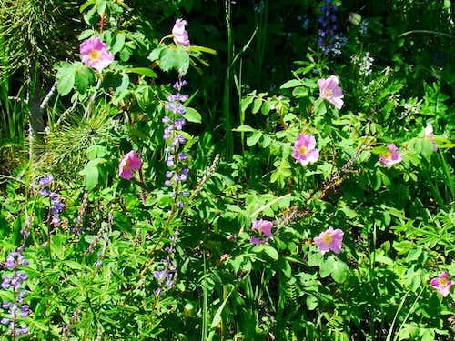 Bear Mountain Wildflowers