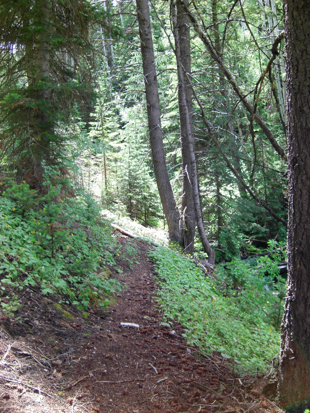 Bull Mountain Forest Trail